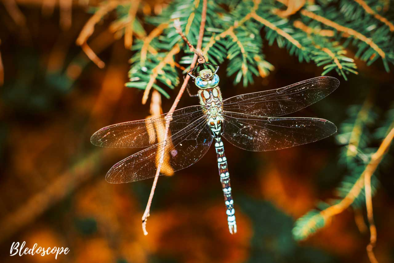 A dragon fly.